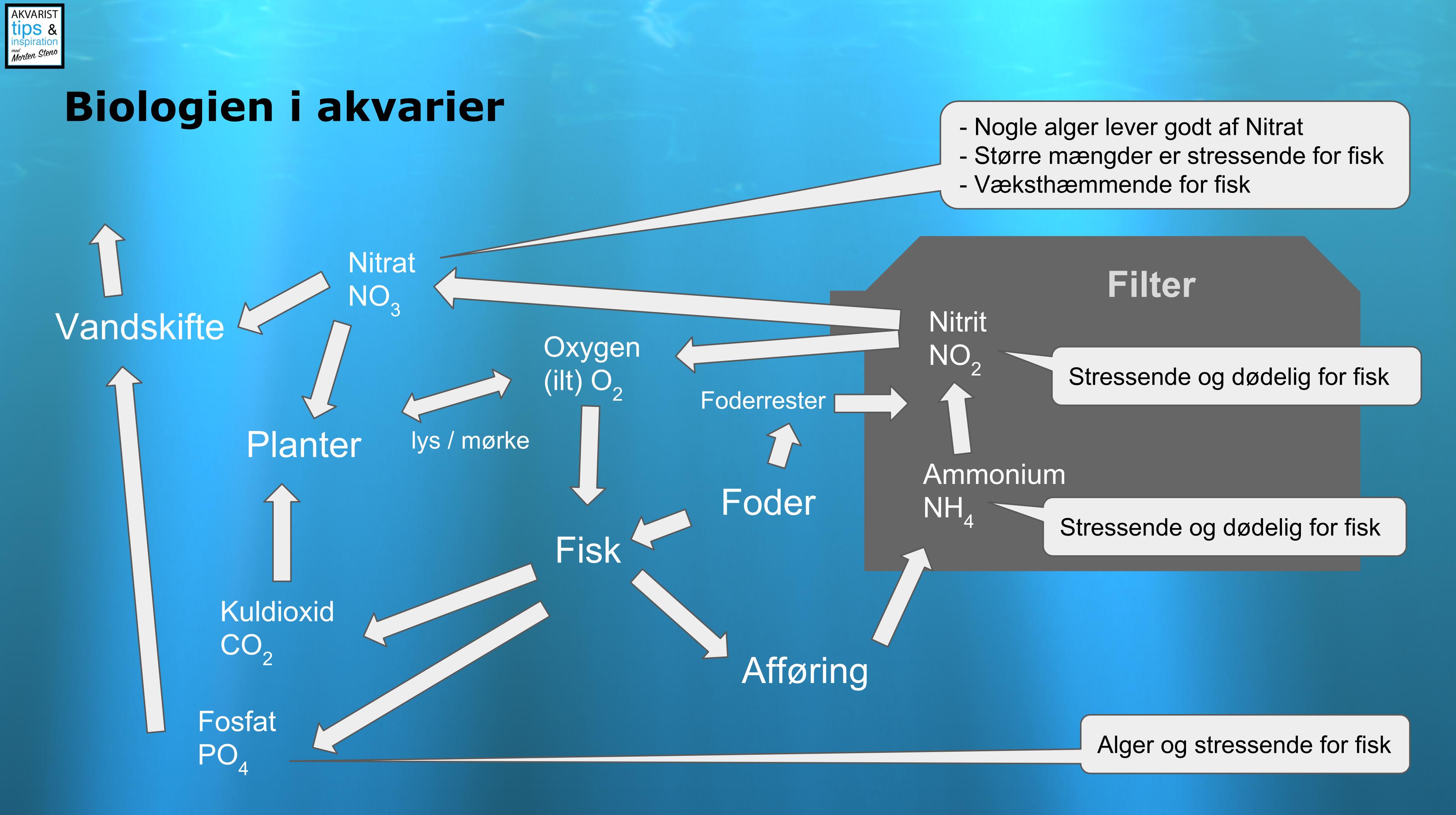 Biologien i akvariet - Akvarist Tips Inspiration med Morten Steno