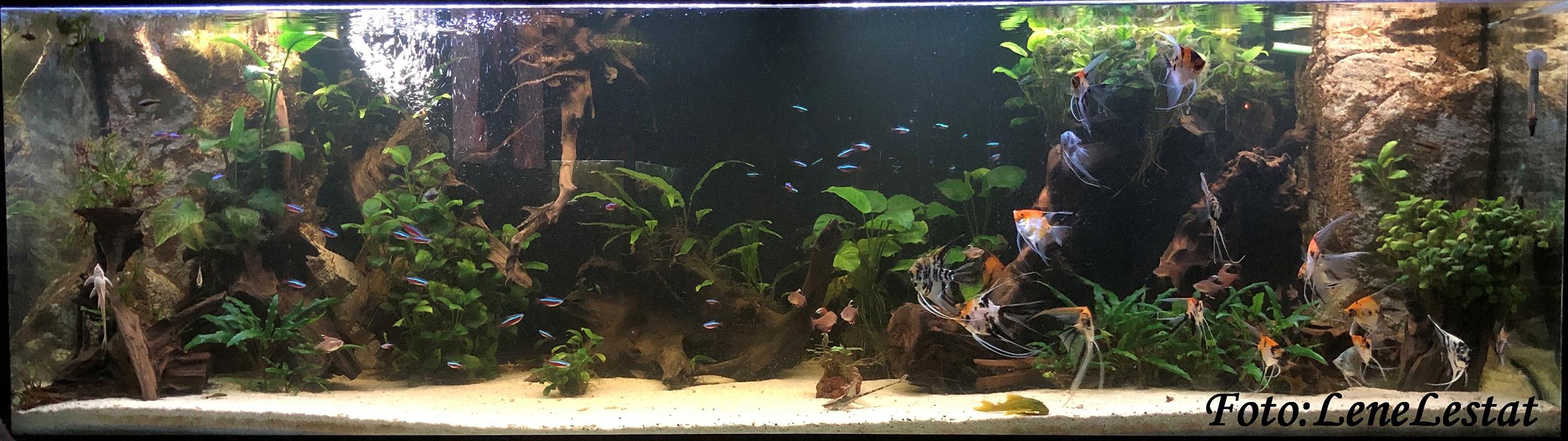 AkvarieSNAK 720 liter - Lene