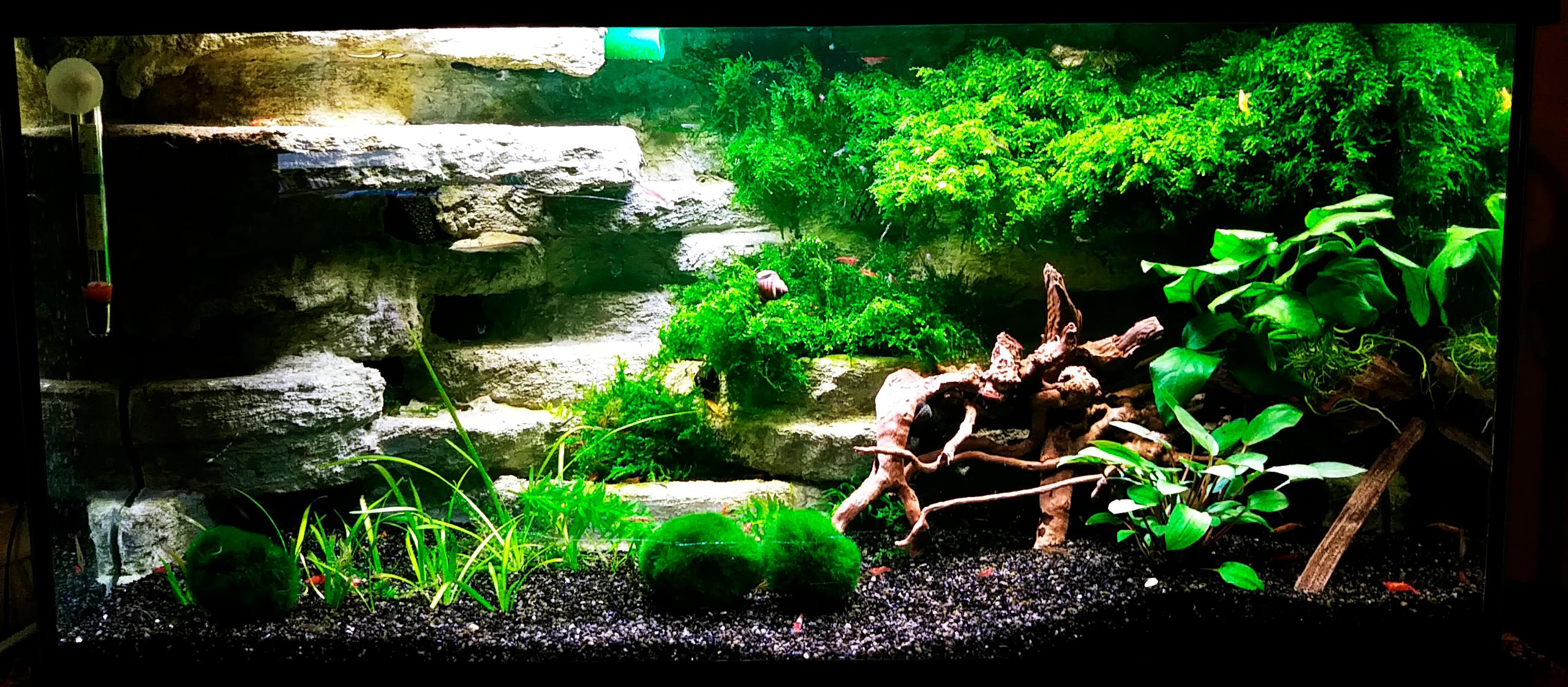AkvarieSNAK - Allan - 54L