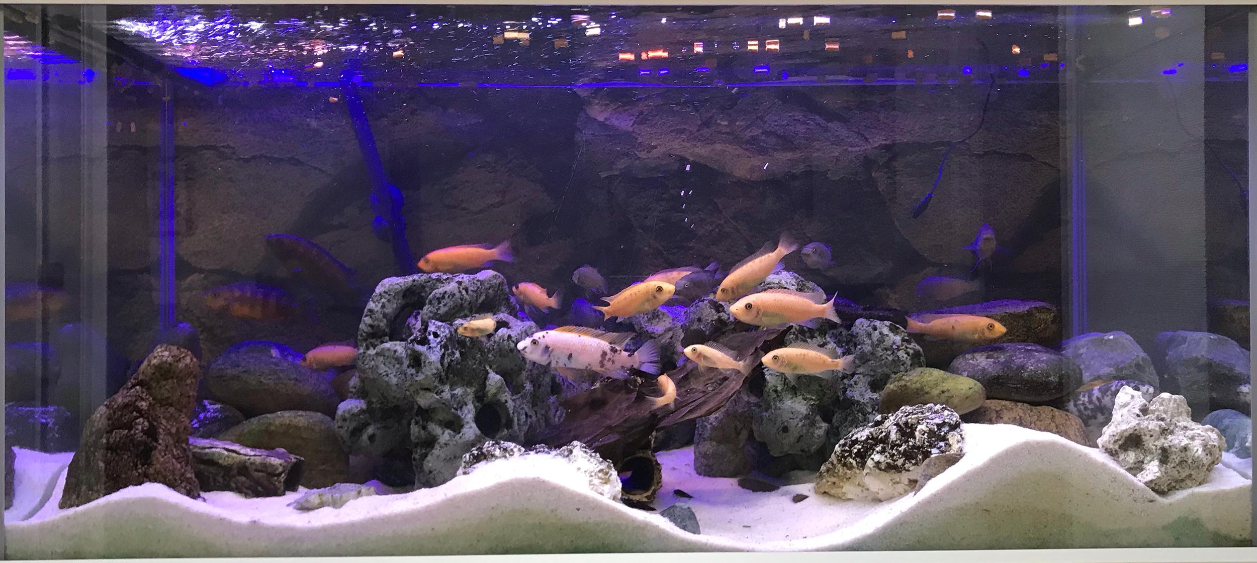 AkvarieSNAK - Kim 250