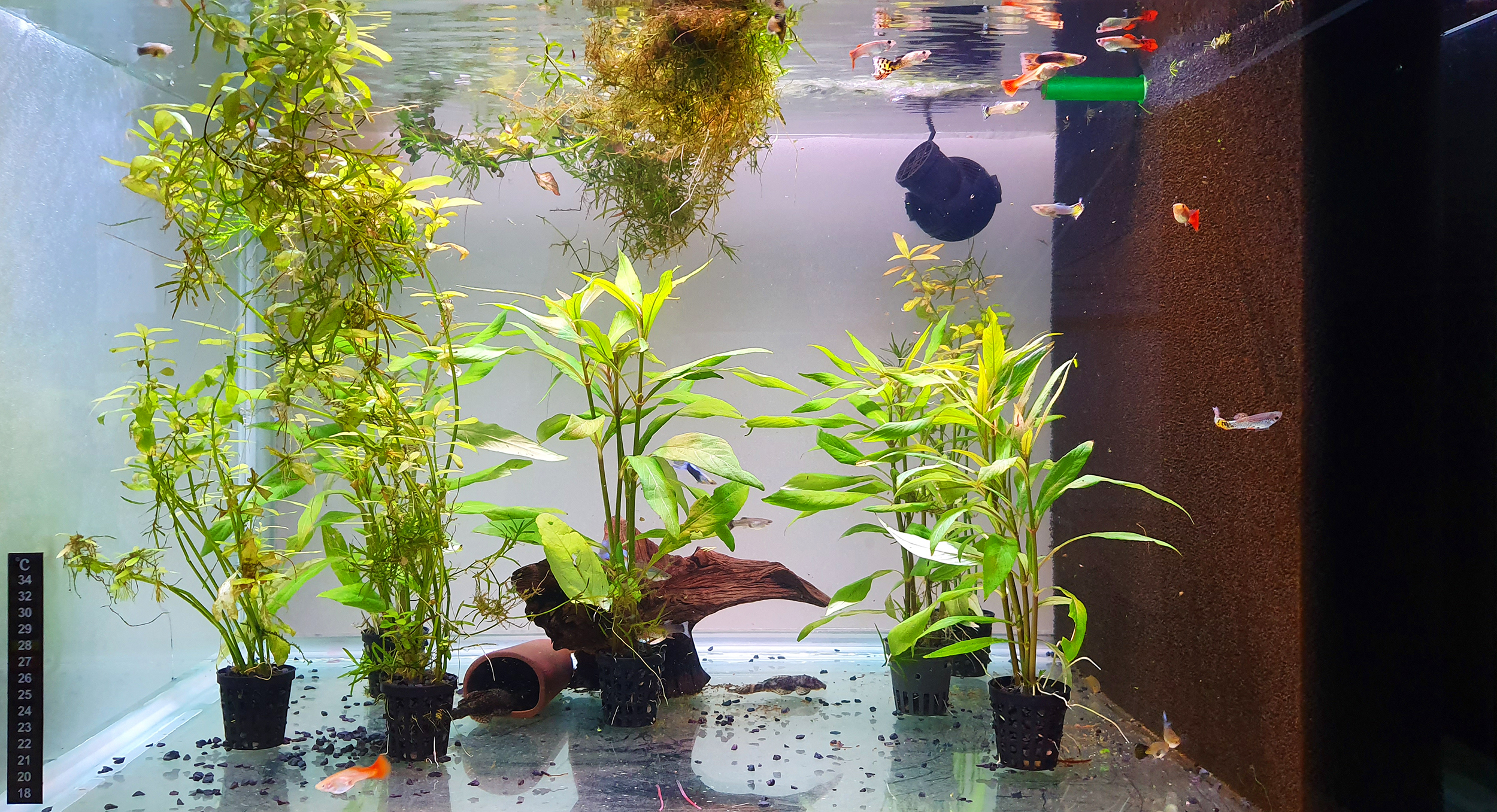 Akvarist Tips Inspiration AkvarieSNAK - 27 - Jan 255 liter - 20190821_173634